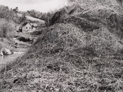 Tim Barnwell  -  Kudzu-covered hill and farmhouse, 2002 / Silver Gelatin Print  -  11 x 14