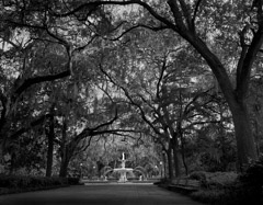 Tim Barnwell  -  Forsyth Park, Savannah Georgia, 2009 / Pigment Print  -  Available in Multiple Sizes