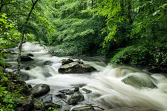 Tim Barnwell  -  Oconaluftee River, Great Smoky Mountains National Park / Pigment Print  -  Available in Multiple Sizes