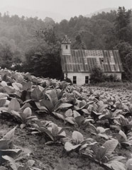 Tim Barnwell  -  Old church in tobacco field, 1981 / Silver Gelatin Print  -  11 x 14