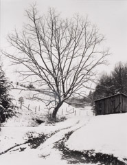 Tim Barnwell  -  Tree and Shed in Snow, Hurricane, Madison County, NC, 1987 / Silver Gelatin Print  -  11 x 14