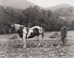 Tim Barnwell  -  James Griffith with Horse in Field, Pensecola Section, Yancey County, NC, 1983 / Silver Gelatin Print  -  16 x 20