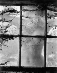 Wynn Bullock  -  Nude Behind Cobwebbed Window, 1955 / Pigment Print  -  Available in multiple sizes