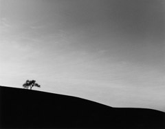 Edna Bullock  -  Lone Oak 1985 / Pigment Print  -  available in multiple sizes