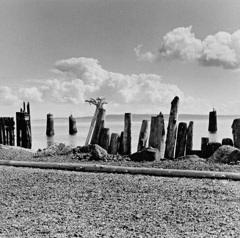 Edna Bullock  -  Piling Fence at Port Townsend 1995 / Pigment Print  -  available in multiple sizes