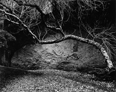 Edna Bullock  -  Tree and Wall West Pinnacles 1985 / Pigment Print  -  available in multiple sizes