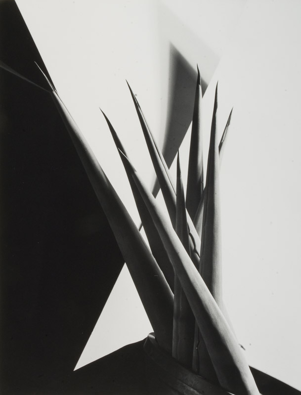 Lumiere » Blog Archive » Imogen Cunningham