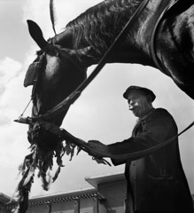 Mario DiGirolamo  -  A Man And His Horse, Rome Italy, 1957 / Silver Gelatin Print  -  Available in multiple sizes