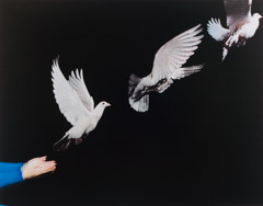 Harold Edgerton  -  Pigeon Released, 1965 / Dye Transfer  -  14 x 18