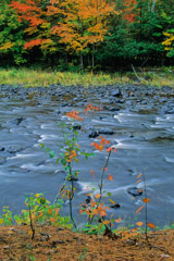 Peter Essick  -  Sturgeon River Gorge, Michigan, 1998 / Pigment Print  -  available in multiple sizes