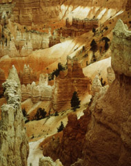 Philip Hyde  -  Bryce Canyon, Navajo Loop Trail, Utah, 1977 / Cibachrome Print  -  8 x 10