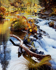 Philip Hyde  -  Spanish Creek, Fall, Northern Sierra Nevada, California, 1968 / Pigment Print  -  20 x 16