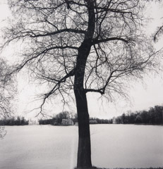 Michael Kenna  -  Tree and Tail Feathers, Tsanskoe Selo, Russia, 2000 - 2/45 / Silver Gelatin Print  -  8.75 x 8.75