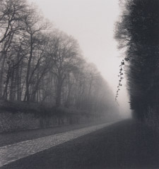Michael Kenna  -  Suspended Vine, Marly France, 95/97 - 22/45 / Silver Gelatin Print  -  8x8.5