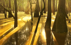 Diane Kirkland  -  Moody Swamp / Pigment Print  -  Available in Multiple Sizes