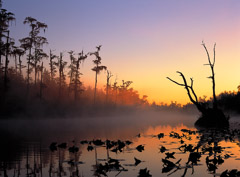 Diane Kirkland  -  Okefenokee / Pigment Print  -  Available in Multiple Sizes