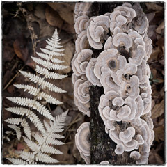 Diane Kirkland  -  Fungus and Fern / Pigment Print  -  Available in Multiple Sizes