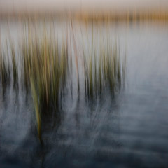 Jon Kolkin  -  Marsh Monet, 2008 / Pigment Print  -  20x20 or 24x24