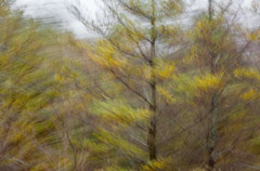 Julieanne Kost  -  Vermont, #1755, 2012 / Pigment Print  -  Available in Multiple Sizes