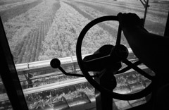 Mark Maio  -  Cutting Wheat, Marquette, KS, 1993 / Carbon Pigment Print  -  8.5 x 11
