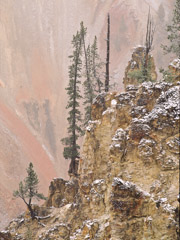 Tom Murphy  -  Pine Tree, Grand Canyon of the Yellowstone / Color Pigment Print  -  Available in multiple sizes