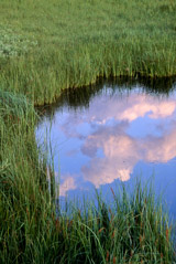 Tom Murphy  -  Reflected Clouds / Color Pigment Print  -  Available in multiple sizes