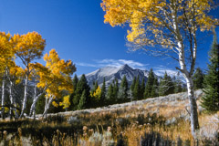 Tom Murphy  -  Electric Peak and Aspens / Color Pigment Print  -  Available in multiple sizes