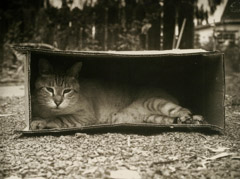 Rondal Partridge  -  Cat in a Box / Platinum Palladium  -  6 x 8