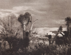 Paul Strand  -  Near Saltillo, 1932 / Photogravure  -