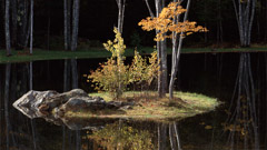 Robert Weingarten  -  Pond Reflections, Maine, 1999 / Pigment Print  -  20 x 36