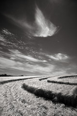 Cara Weston  -  Crop Circle, England / Pigment Print  -  Available in Multiple Sizes