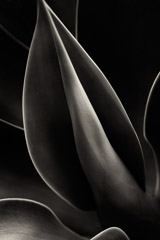 Cara Weston  -  Plant Curves, Moorea 2014 / Pigment Print  -  Available in Multiple Sizes