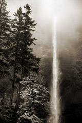 Cara Weston  -  Trees and Waterfall, 2013 / Pigment Print  -  Available in Multiple Sizes