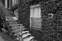 Tim Barnwell  -  2425, Other Kehoe House, 1884, stairway and ivy, Columbia Square, Savannah, GA /   -