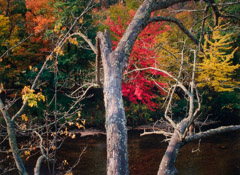 Robert Glenn Ketchum  -  Adirondack Afternoon, 2001 / Chromogenic Print  -  20 x 24