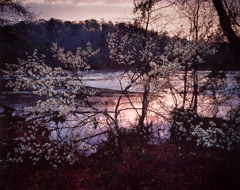 Robert Glenn Ketchum  -  CR 17, Blossoms in the Twilight, 1986 / Cibachrome Print  -  18.5 x 23.75