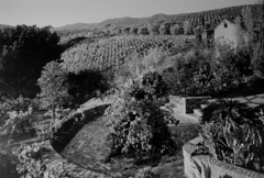 Ansel Adams  -  Garden and Vineyards at the old winery / Silver Gelatin Print  -  22 x 32 (32x40 mat)