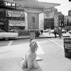 Vivian Maier  -  1960's, Chicago Il, (dog phone) / Silver Gelatin Print  -  12 x 12 (on 16x20 paper)