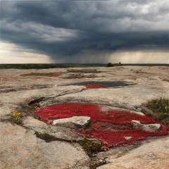 Diane Kirkland  -  Arabia Mountain, GA / Pigment Print  -  Available in Multiple Sizes