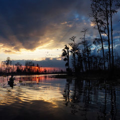 Diane Kirkland  -  Okefenokee, GA / Pigment Print  -  Available in Multiple Sizes