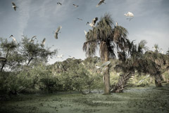 Diane Kirkland  -  Ossabaw Island, Rookery / Pigment Print  -  Available in Multiple Sizes