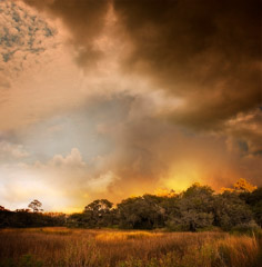 Diane Kirkland  -  Storm, Ossabaw Island, GA / Pigment Print  -  Available in Multiple Sizes