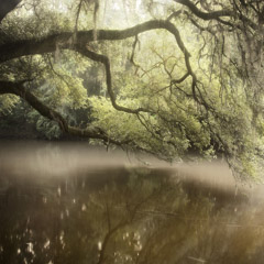 Diane Kirkland  -  Ichawaynochaway Creek, GA / Pigment Print  -  Available in Multiple Sizes