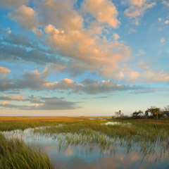 Diane Kirkland  -  Morning Marsh, Ossabaw Island, GA / Pigment Print  -  Available in Multiple Sizes