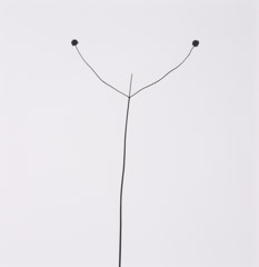 Harry Callahan  -  Weed Against Sky, 1948 / Silver Gelatin Print  -  7 x 6.75