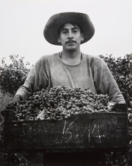 Pirkle Jones  -  Grape Picker, 1956 / Silver Gelatin Print  -  13.25 x 10.5