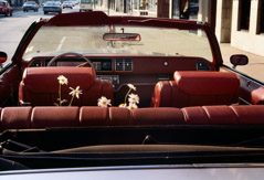 Vivian Maier  -  Chicago, June 1978,  (daisies in car) / Chromogenic Print  -  10 x 15 on 16 x20 paper