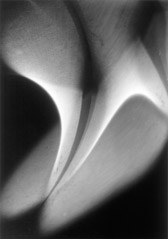 Wynn Bullock  -  Light Abstraction, 1939 / Pigment Print  -  9x12, 11x14 or 16x20