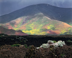 Philip Hyde  -  Lava, Flowers, Craters of the Moon National Monument, Idaho, 1983 / Pigment Print  -  16 x 20