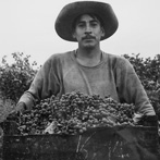 Pirkle Jones, Grape Picker, 1956